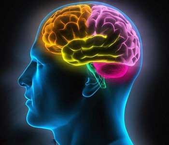 大脑也会营养不良,怎么吃才能补充能量