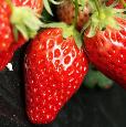 男性们防衰老可吃草莓樱桃