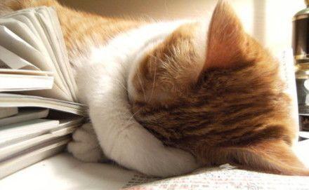 睡不好會變老4種食物讓你一夜安眠