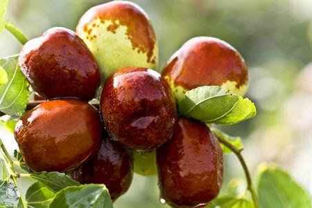 肠胃不好少吃两种水果 多喝一味茶