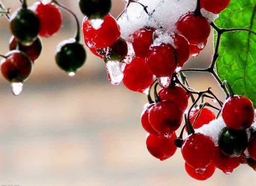 胃不好能吃水果吗?吃什么水果能养胃