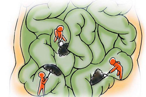 肠道清洁工:益生菌、膳食纤维、抗氧化剂