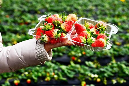 草莓现采别现吃!教你2招去农药