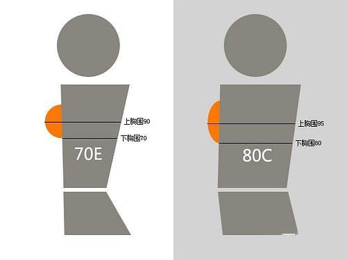 75C和80B哪个大?女人罩杯你了解多少