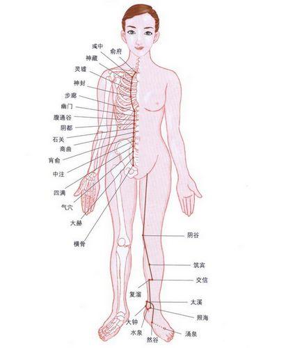 了解肾经,能让男人更好的补肾