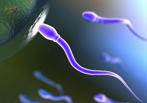 如何利用这些知识提高精子的质与量