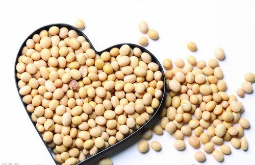 哪些豆类具有出色的补肾功能