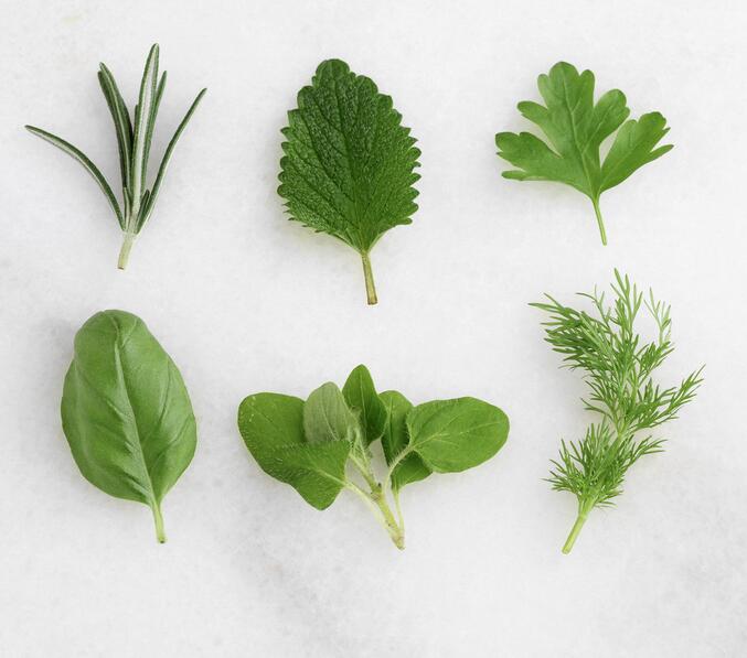 春季吃野菜 可口还能入药
