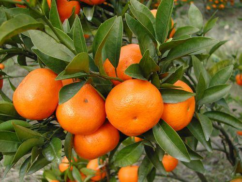 春季多病 防治感冒多吃5种水果