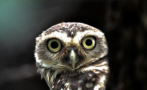 眼睛奇痒怎么办 清明吃螺养眼