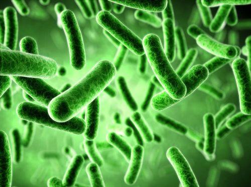 双歧杆菌的多少决定着人类的健康