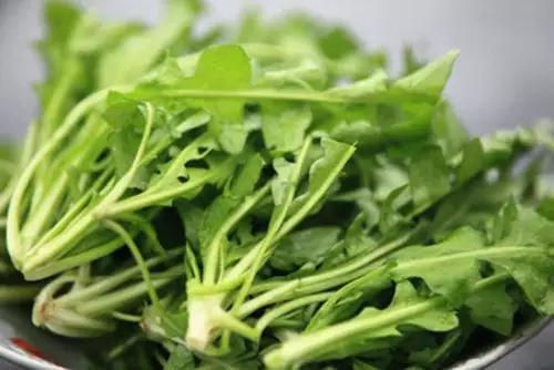 蒲公英的作用——用途最广的排毒草