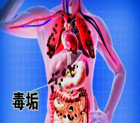恢复肠道健康,清理累积毒素,推荐益生菌