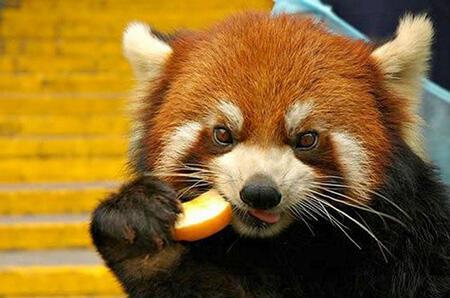 """为什么老中医总提醒""""要少吃水果"""""""