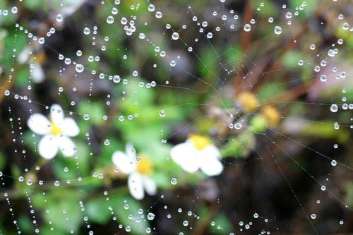 千寒易除,一湿难去,夏天祛湿怎么做?