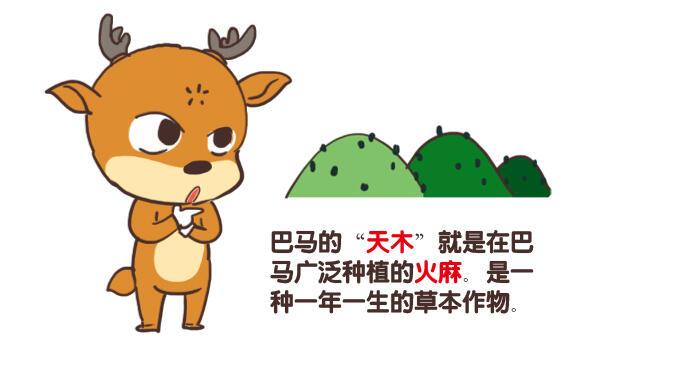 """【漫画】巴马的""""天木"""""""