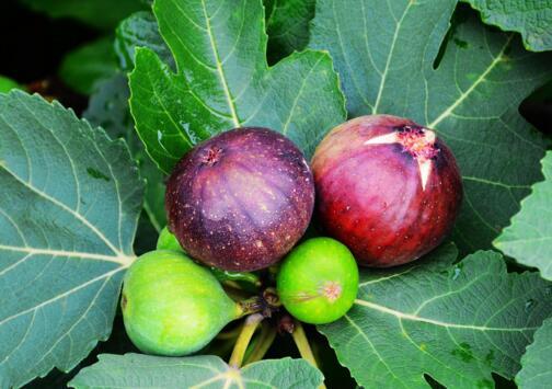 8月份不可错过的水果,味美营养养生