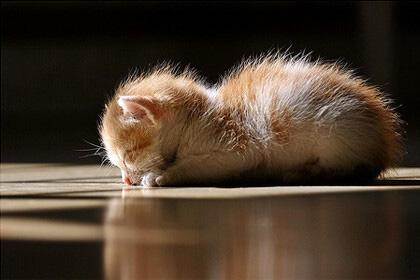 伏天天热人易倦,除乏睡好子午觉