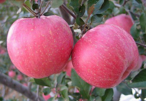 上火、口腔溃疡,多吃5种水果可以防治