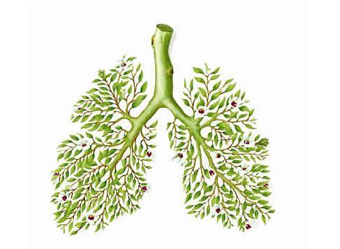 秋季养肺,要做到3件事