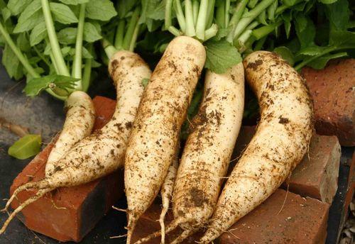 最适合秋季吃的时令蔬菜,必收