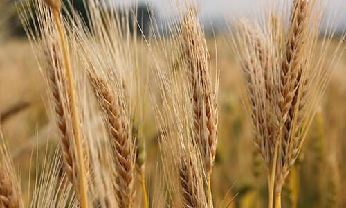 在米饭中加入4种东西,轻松治疗多种病!