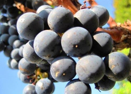 吃水果补铁,黑葡萄第一名?错了!