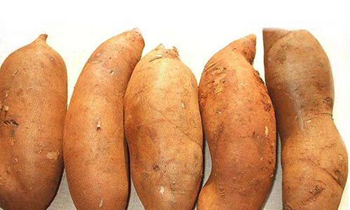 这种水果长得像红薯,竟有这种保健功效
