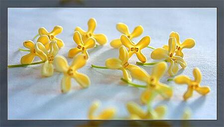 既养眼福又饱口福的花,有哪些