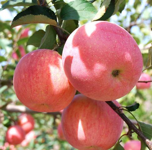 水果也可能是过敏原?冬季如何成为过敏绝缘体