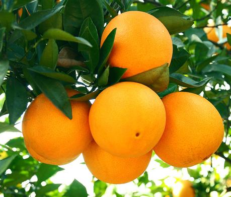 夜班族都需要这五种水果,可以减少熬夜对皮肤的伤害