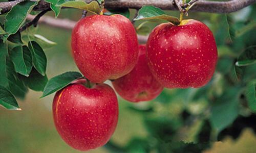 血糖太高?这六种水果来帮忙