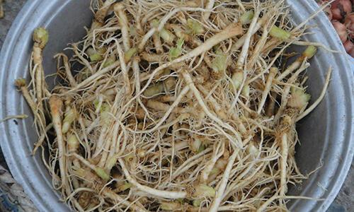 这8种蔬菜根对身体大有益处,别再当垃圾扔掉了!