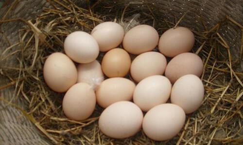 早晨吃鸡蛋真的好吗?