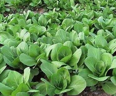 提高抵抗力病毒不入侵!春天提升免疫力的10大好食材