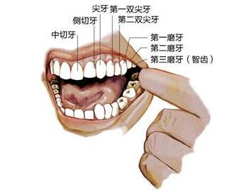 磨牙怎么办,如何治疗磨牙