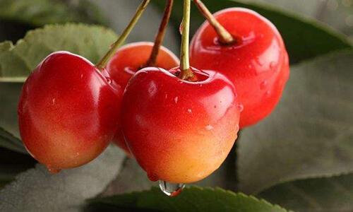 夏天吃什么水果最美容?