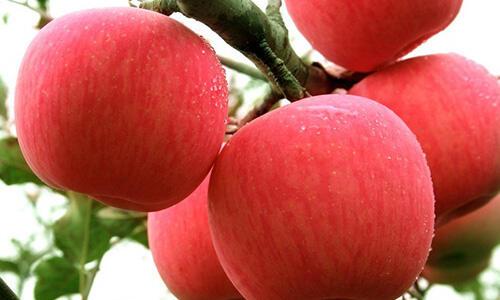 吃苹果到底要不要削皮?