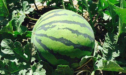 夏季吃8种水果,抗感冒超有用!