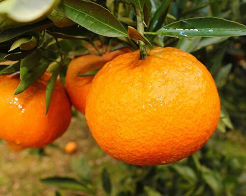 夏季抗感冒,这6种水果必备