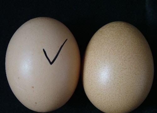 如何辨别真假鸡蛋