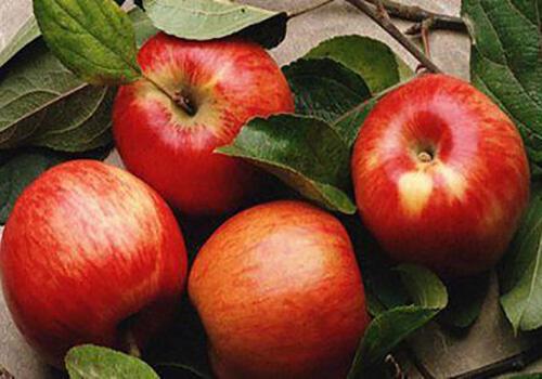 糖尿病吃什么水果好?