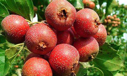 冬天少碰5种水果,可以有效避免胃痛