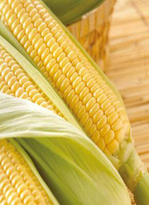 常吃玉米,有这些好处,你了解多少呢?