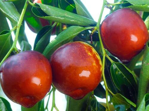 秋天水果丰收,好吃又营养,但千万不要过量