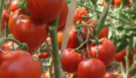 女性缺血貧血?吃這四種蔬菜最補血!