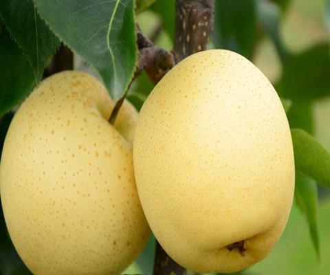 感冒吃什么水果好,4種水果最有效!