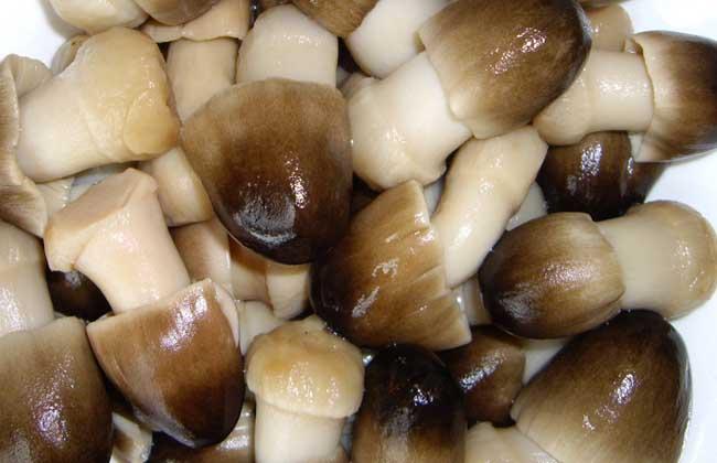 """蘑菇加一物,""""黃金搭配""""好處多!補鈣、健腦、護腸胃,越吃越健康"""